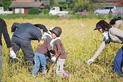 「産地へ行こう。稲刈りツアー」を開催しました。