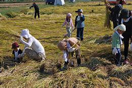 9月21-22 脱穀までがんばります!稲刈りツアー